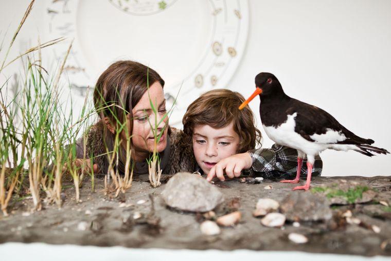 Eine Mutter betrachtet mit ihrem Kind die Wattenmeerausstellung im Landesmuseum Natur und Mensch in Oldenburg