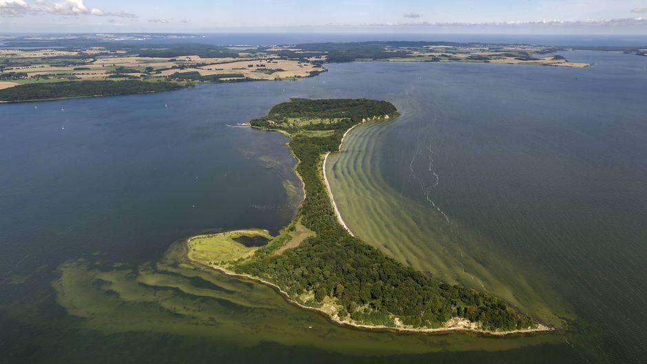 Die Insel Vilm ist mit ihren spektakulären Steilklippen und urwüchsigen Wäldern ein Muss für alle Naturfans.