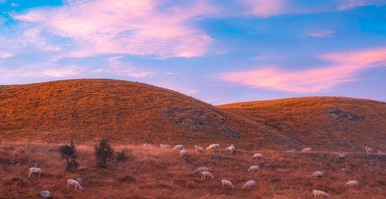 """Zweitplatzierter der Kategorie """"bis 14 Jahre"""" wurde Neil Shet (14) aus den USA. Er fotografierte in seiner Serie Schafe in Neuseeland – ihn faszinierte das Lichtspiel aus Abendrot und Landschaft."""
