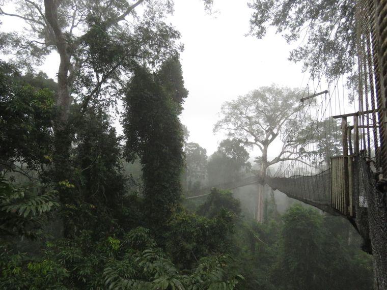 Im Kakum-Nationalpark läufst du in 40 Metern Höhe auf Westafrikas einzigem Baumwipfel-Pfad über den Regenwald.
