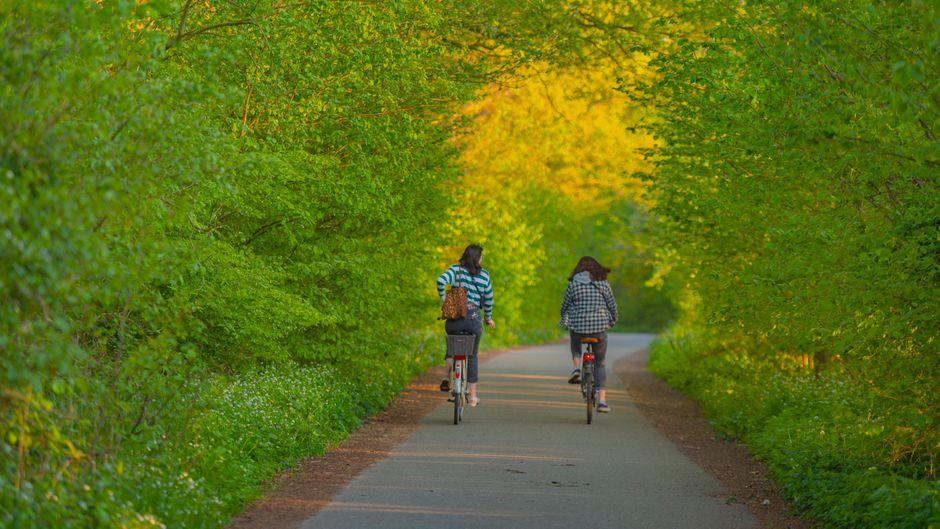 Deutschland hat für Radfahrer viele unterschiedliche Touren zu bieten. (Symbolbild)