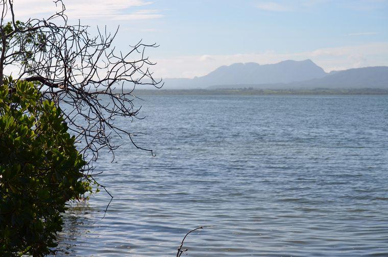 Mangrovenwälder auf Cayo Levisa, Kuba