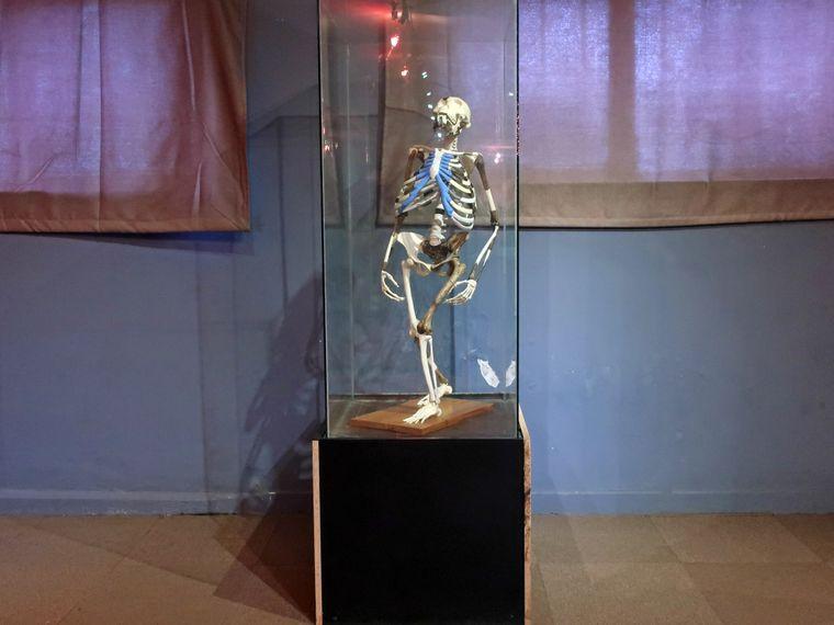 """""""Lucys"""" Knochen werden auf ein Alter von 3,2 Millionen Jahren datiert. Du kannst sie im National Museum of Ethiopia sehen."""