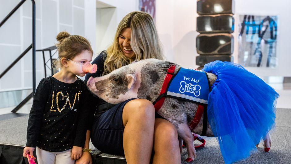 Das Schweinchen Lilou nimmt ängstlichen Passagieren am San Francisco International Airport  ihre Flugangst.