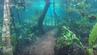 Magische Unterwasserwelt statt Wanderweg im Naturreservat Recanto Ecológico Rio da Prata in Brasilien.