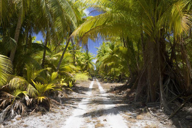 Die Marschallinseln gehören zu den kleinsten Staaten der Erde – nur 53.000 Menschen leben dort auf einer Fläche von 181 Quadratkilometern. Für Touristen sind die weißen Sandstrände ein Hauptanziehungspunkt.