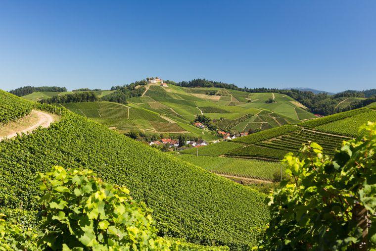 Wenn du den Durbacher Weitblick wandern willst, solltest du knapp vier Stunden dafür einplanen. Währenddessen bieten sich immer neue Perspektiven auf Badens Weinort Nummer eins.