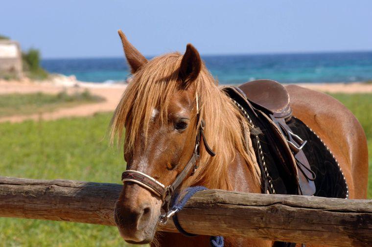 Mallorca auf dem Pferderücken entdecken: Dafür besuchst du am besten den Reiterhof Rancho Jaume.