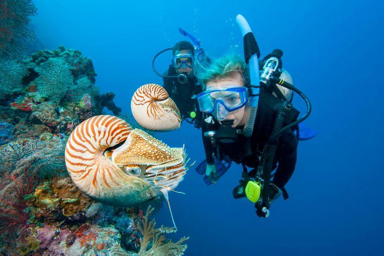 Palau ist ein Paradies für Taucher.