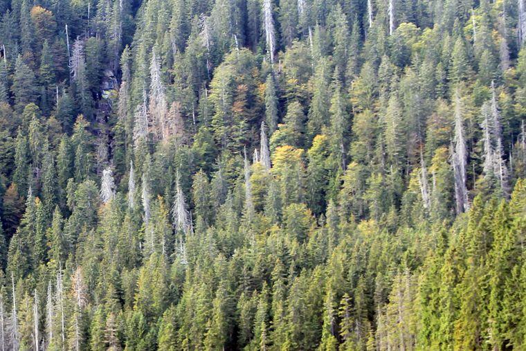 Manchmal sieht man den Wald vor lauter Bäumen nicht. Das kann dir im Bayerischen Wald durchaus passieren.