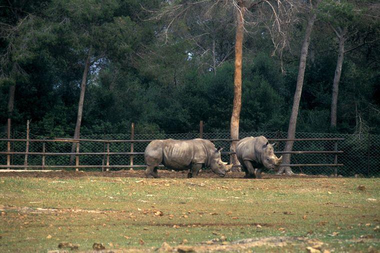 Im Safari-Zoo Reserva Africana kannst du exotische Tiere aus nächster Nähe beobachten.