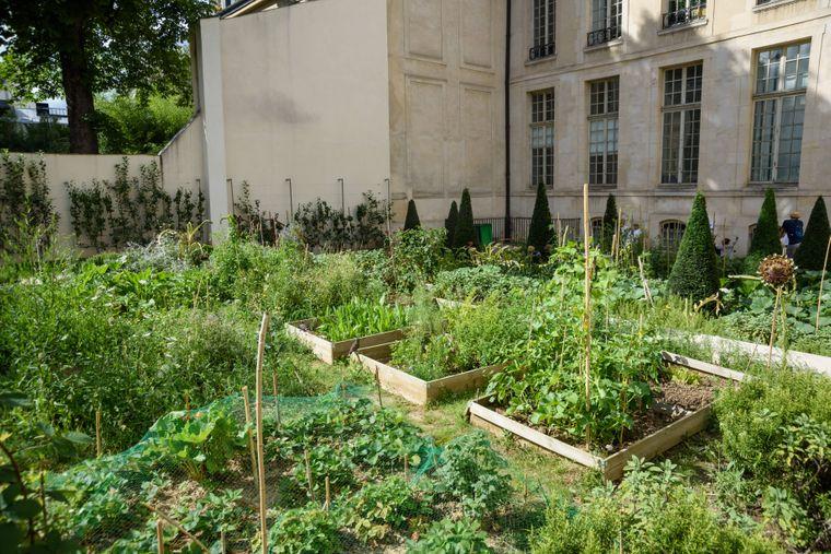 Eine grüne Oase mitten in der Stadt: Beim Urban Gardening kannst du abschalten.