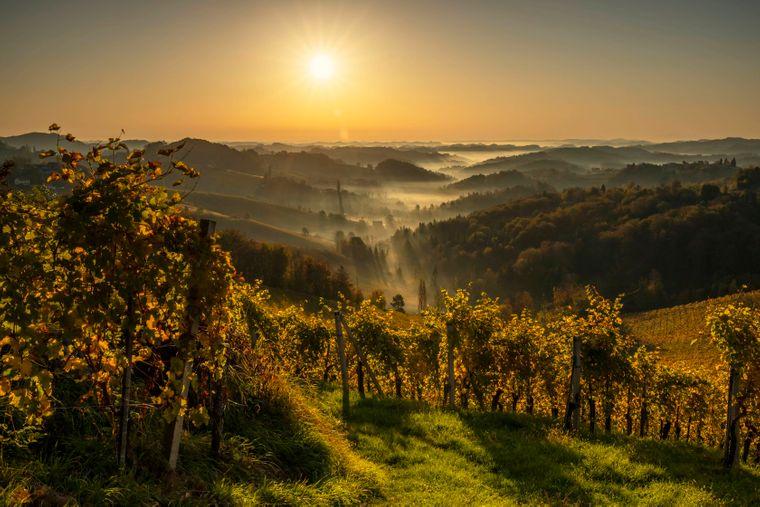 Die Ausblicke in der Steiermark faszinieren garantiert nicht nur Weinliebhaber.
