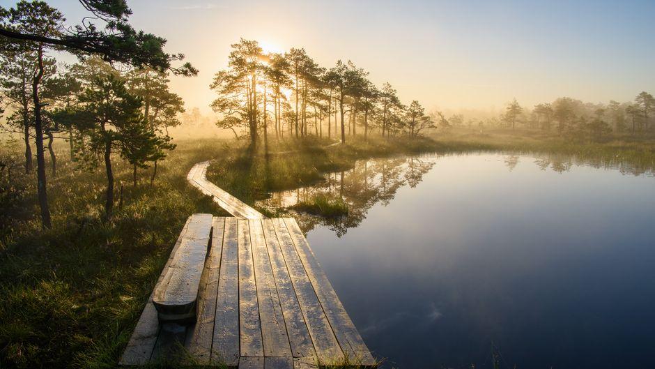 Der Soomaa-Nationalpark im Südwesten von Estland ist ein beliebtes Ziel von Naturfans. Soomaa bedeutet übersetzt Sumpfland, und genau das ist es. Im Sommer lassen sich die Moore am besten auf hölzernen Stegen erkunden.