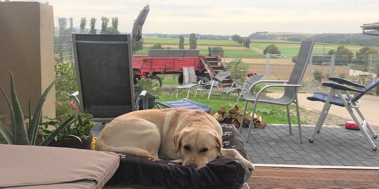 Das Maifelder Uhlenhorst landet auf Platz vier der hundefreundlichsten Hotels.