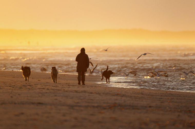 Spaziergang mit Hunden auf Ameland.