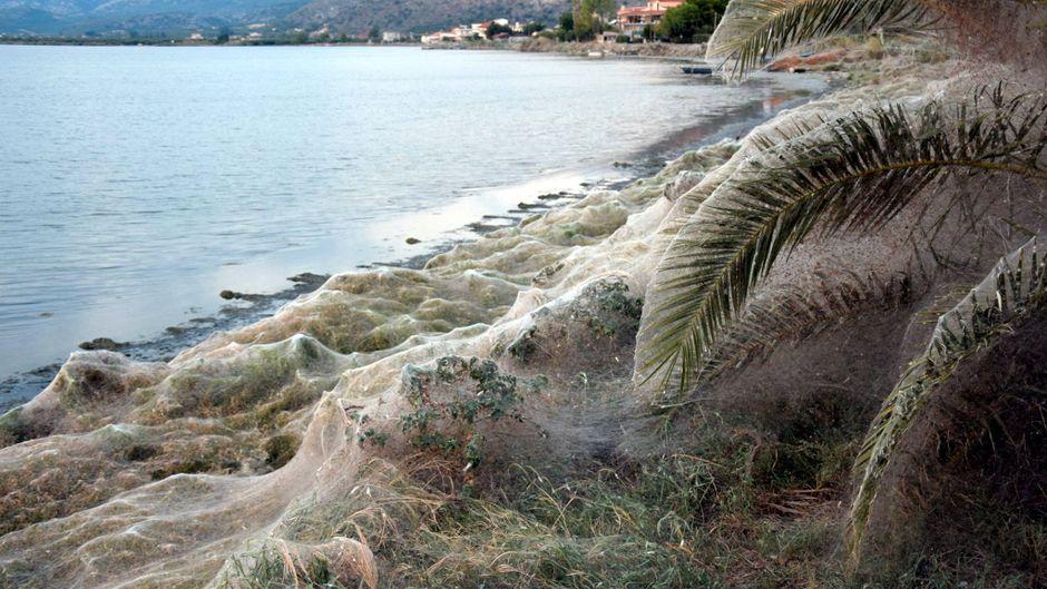 Riesen-Spinnennetz an der griechischen Küste bei Etoliko.