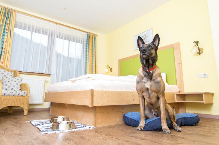 Das Hotel Grimming Dogs & Friends schafft es in diesem Ranking auf den dritten Platz.