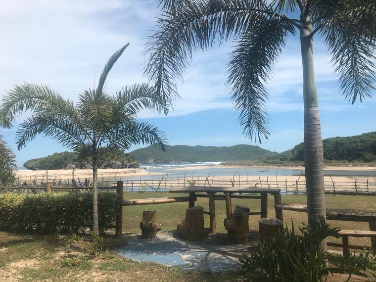 Palmen an einem Strand in Indonesien