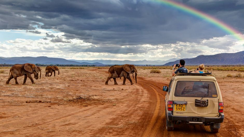 Touristen beobachten Elefanten in Kenia von einem Jeep aus.inem Jeep aus, Samburu National Reserve, Kenia, Ostafrika, Afrika, ÖffentlicherGrund Reisen xcb x0x 2011 quer ÖffentlicherGrund 4x4 africana Afrika afrikanisch afrikanische afrikanischer afrikanisches Allrad Allradantrieb Allradfahrzeug Allradfahrzeuge am an ansehen außen Außenaufnahme aus aussen Aussenaufnahme Aussenaufnahmen Auto Autos bedeckt bedeckte bedeckter bedecktes bei beobachten beobachtend beobachtende beobachtender beobachtendes beobachtet bewölkt bewölkte bewölkter bewölktes bewoelkt bewoelkte bewoelkter bewoelktes draußen draussen drive dunkel dunkle dunkler dunkles East einem Elefant Elefanten Fahrzeug Fahrzeuge Fauna Ferien four four-wheel Fremdenverkehr Geländefahrzeug Geländefahrzeuge Geländewagen Gelaendefahrzeug Gelaendefahrzeuge Gelaendewagen Himmel Jeep Jeep-Safari Jeep-Safaris Jeepsafari Jeepsafaris Kenia kenianisch kenianische kenianischer kenianisches Kfz Kraftfahrzeug Kraftfahrzeuge Landwirbeltier Landwirbeltiere Leute Loxodonta Mammalia Mensch Menschen National Natur Naturreservat Naturreservate Naturschutzgebiet Naturschutzgebiete OeffentlicherGrund Ostafrika ostafrikanisch ostafrikanische ostafrikanischer ostafrikanisches Person Personen PKW PKWs Proboscidea Rüsseltier Rüsseltiere Regenbögen Regenboegen Regenbogen Regenwolke Regenwolken Reiseverkehr Reserve Ruesseltier Ruesseltiere Säugetier Säugetiere Saeugetier Saeugetiere Safari Safaris Samburu sehen sieht Tag Tage Tageslicht tagsüber tagsueber Tier Tiere Tierreich Tierwelt Tourismus Tourist Touristen Touristik touristisch touristische touristischer touristisches Urlaub Urlauber Vertebrata Vierradantrieb von Wagen wheel Wildlife Wildtier Wildtiere Wirbeltier Wirbeltiere Wolke Wolken Wolkenhimmel Wolkenstimmung wolkig wolkige wolkiger wolkiges  56818623 Date 12 10 2011 Copyright Imago image broker Tourists observed Elephants Loxodonta africana from a Jeep out Samburu National Reserve Kenya East Africa Africa ÖffentlicherGrund Travel  x0x 2011 horizontal ÖffentlicherGrund 4x4 africana Africa African African African African Four-wheel Four-wheel drive Four-wheel vehicle Four-wheel vehicles at to See exterior Outside view out exterior Outside view Outside Car Cars overcast covered covered covered at observed Observing observed observer observer observed Cloudy Cloudy cloudy bewölktes bewoelkt cloudy cloudy cloudy outside outside Drive dark dark darker dark East a Elephant Elephants Vehicle Vehicles Fauna Holidays Four Four Wheel Tourism Terrain vehicle Terrain vehicles SUVs Gelaendefahrzeug Gelaendefahrzeuge SUVs Heaven Jeep Jeep Safari Jeep Safaris Jeep Safari Jeep safaris Kenya kenianisch Kenyan Kenyan Kenyan Vehicle Motor vehicle Motor vehicles Land vertebrates Land vertebrates People Loxodonta Mammalia Man People National Nature Nature Reserve Nature reserves Nature reserve Nature reserves OeffentlicherGrund East Africa East African Great Ostafrikanischer East Africa Person People Car Cars Proboscidea Rüsseltier Proboscids Rainbows Regenboegen Rainbow Rain cloud Rain clouds Travel Reserve Ruesseltier Ruesseltiere Mammal Mammals Mammal Mammals Safari Safaris Samburu see looks Day Days Daylight during the day during daytime Animal Animals Animal kingdom Wildlife Tourism Tourist Tourists Tourism tourists tourism Tourist tourist Holiday Holidaymakers Vertebrata Four-wheel drive from Dare Wheel Wildlife Wild animal Wild animals Vertebrate Vertebrates Cloud Clouds Clouds sky Clouds mood cloudy wolkige Wolkiger cloudy  imago stock&people
