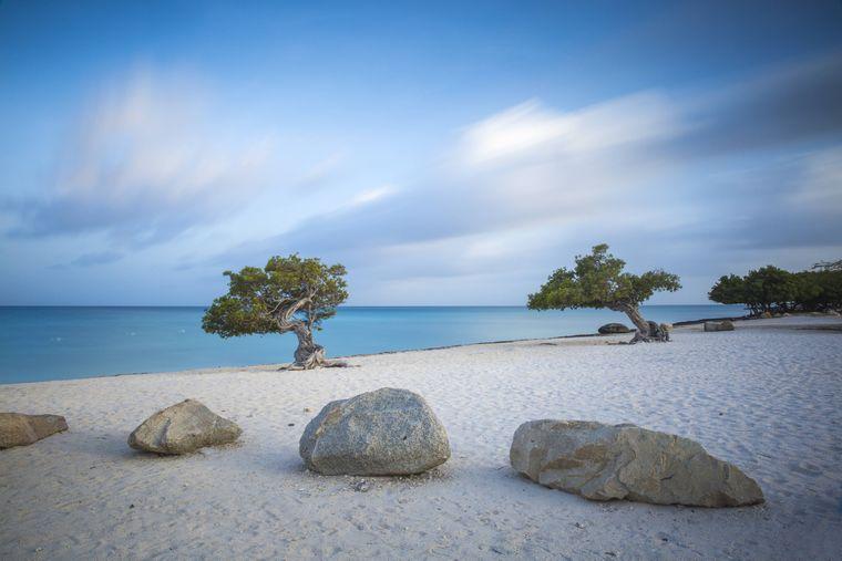 Divi-Divi-Bäume am Eagle Beach auf Aruba.