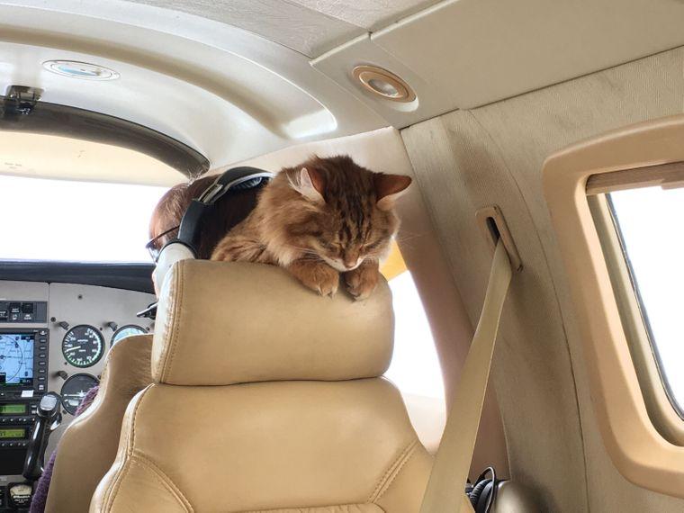 Eine Katze in einem Privatflugzeug, die schläft.