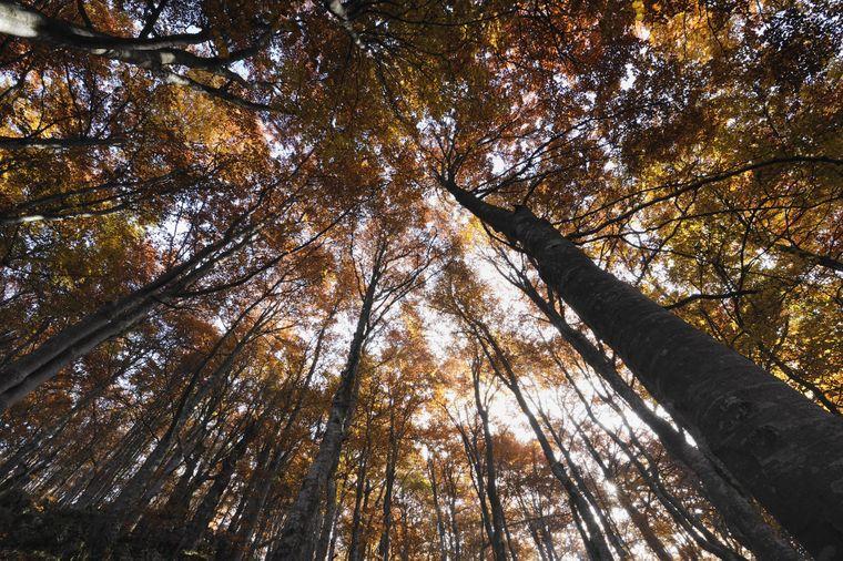Der urige Wald in Rumänien wirkt auf so manchen Besucher angsteinflößend.