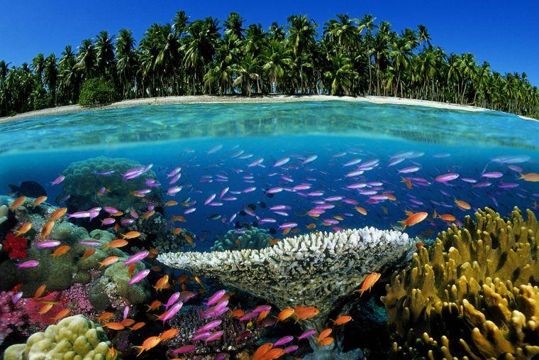 Wer kann diesem Anblick schon widerstehen? Die Fidschi-Inseln sind ein echtes Paradies.