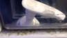 So eklig sind die Bilder aus dem Video der Ryanair-Toilette.