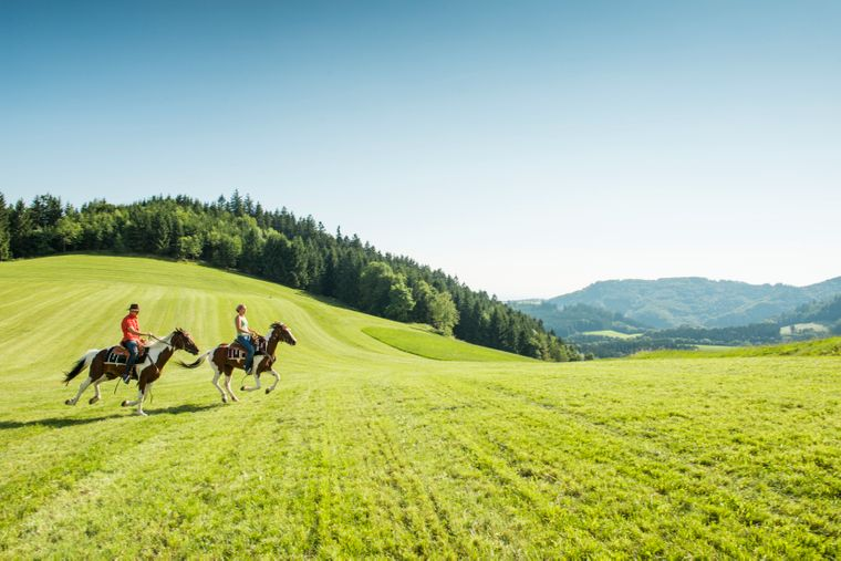 Weite, grüne Wiesen und frische Luft: Perfekt für Reiterferien!
