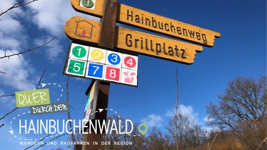 Quer durch...den Hainbuchenwald