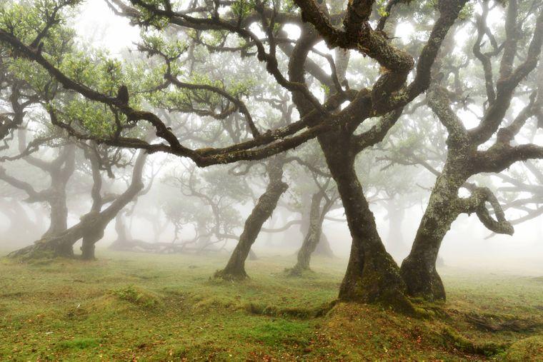Der Feenwald ist oft mit Nebel durchzogen und hat dadurch einen mystischen Charme.