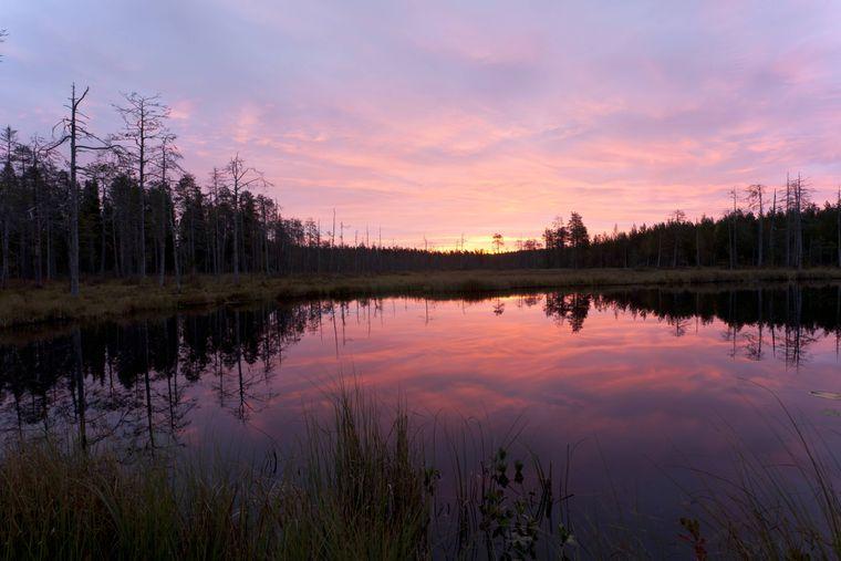 Weite Seenlandschaften, so wie hier in der Taiga, das ist typisch für Finnland.