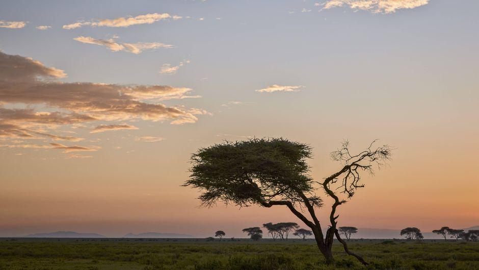Morgendämmerung in der Serengeti in Tansania.
