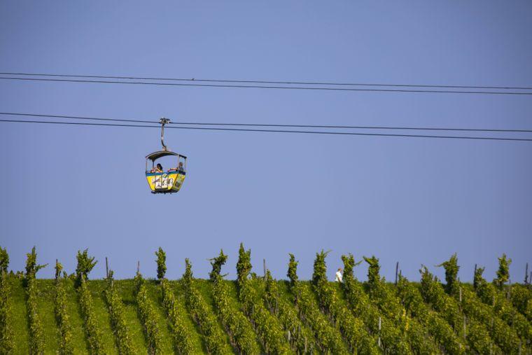 Eine offene Kabinenbahn gondelt über die Weinberge in der Nähe von Rüdesheim.