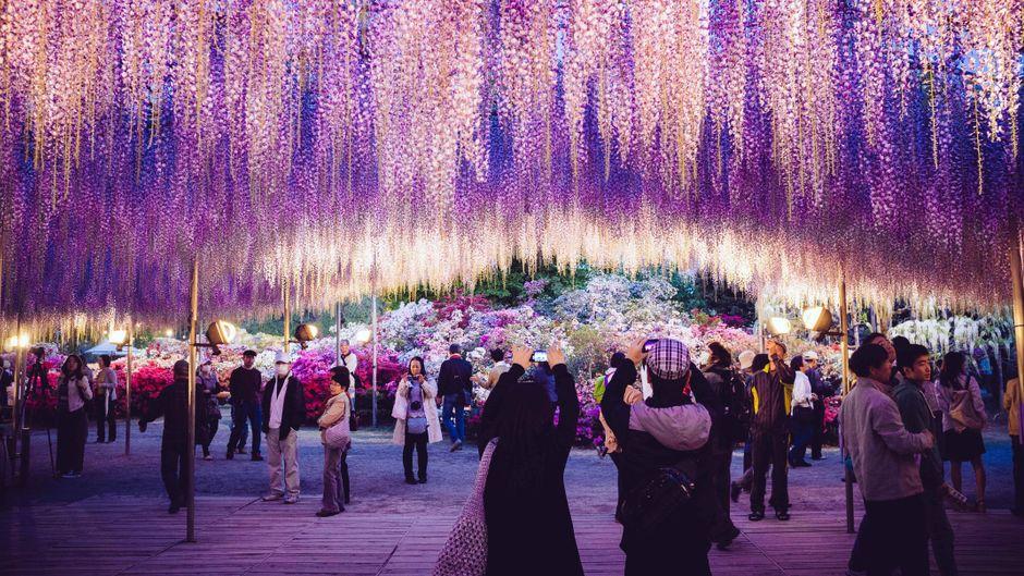 Zahlreiche Blumenliebhaber bewundern die farbenfrohe Pracht.