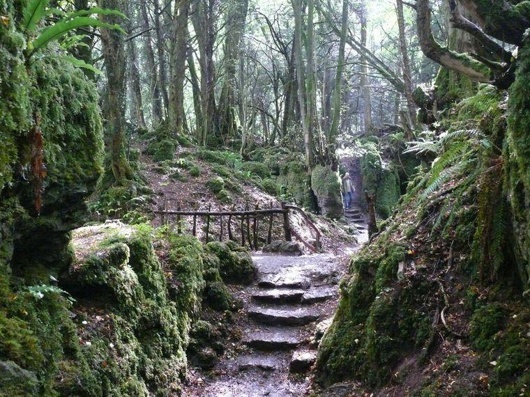 Der uralte Wald Puzzlewood im Forest Dean bei Gloucestershire diente als Location für die Szenen des Forsts um das Schloss von Maz.