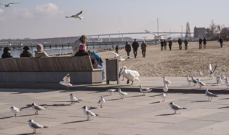 Menschen, Schwäne und Möwen tummeln sich an der Sundpromenade vom Stralsunder Strandbad.