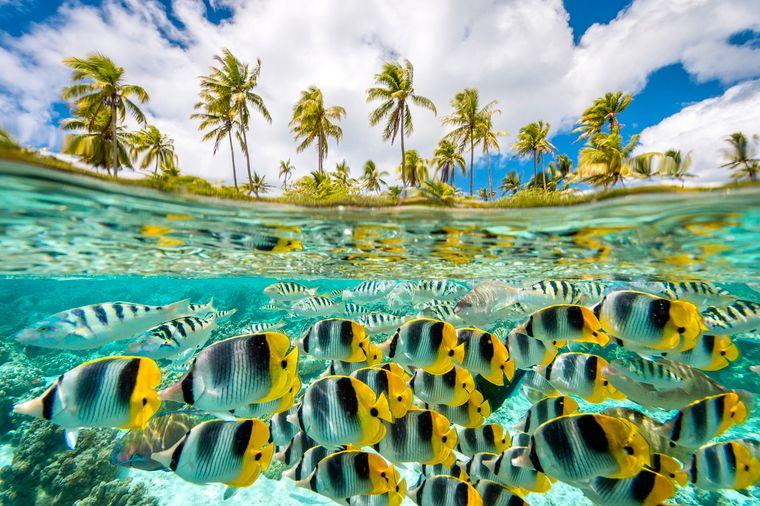 Die Zweitplatzierte in der Insel-Kategorie: Dana Allen aus den USA hat die pazifischen Doppelsattel-Falterfische vor der Insel Taha'a auf Tahiti fotografiert.