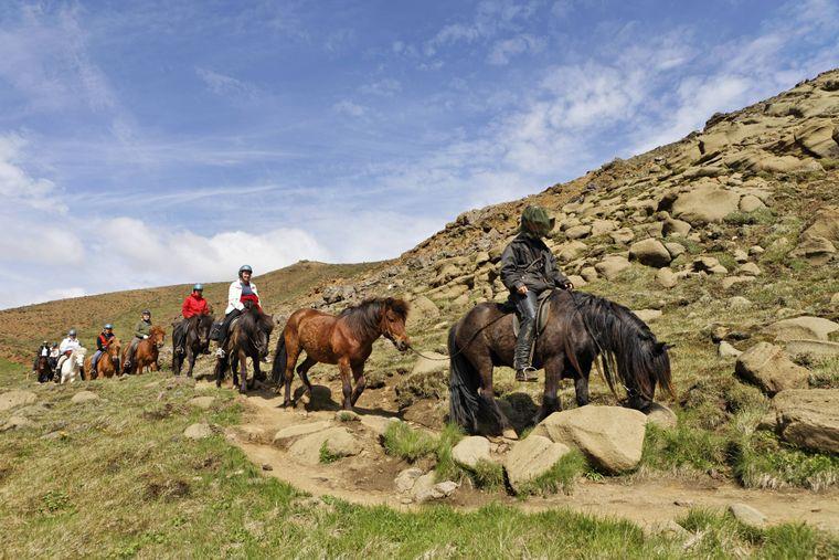 Ein kleines Fischerdorf im Süden von Island ist der Ausgangspunkt für die Touren der Alhestar-Farm.