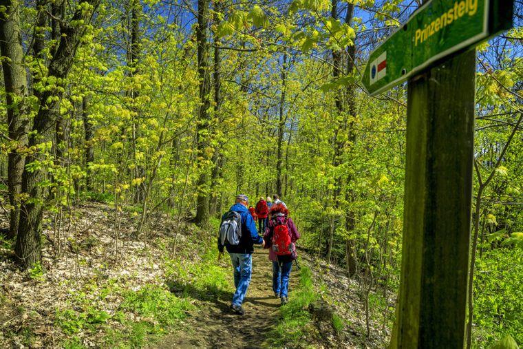 Das Oberlausitzer Bergland lockt bereits zahlreiche Wanderer.