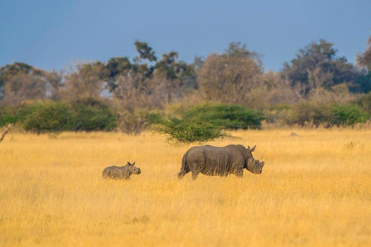Wer nach Botswana reist, der erlebt spannende Safari-Abenteuer. Der Binnenstaat in Südafrika ist landschaftlich geprägt durch das Okavangodelta und die Kalahariwüste.