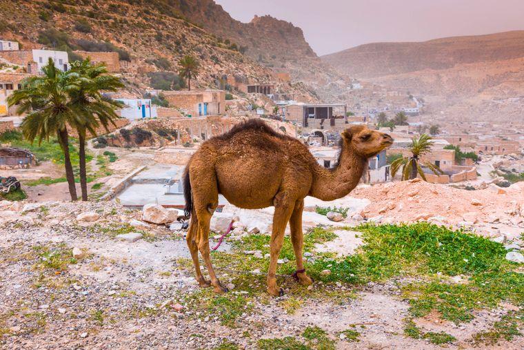 Strandorte, Wüste und historische Städte: Das ist Tunesien. Beliebte Orte sind Tunis, Djerba und SIdi Bou Said.