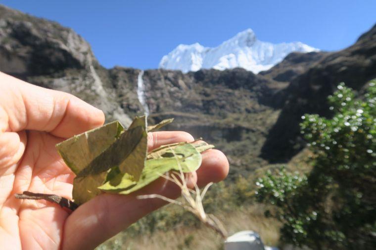 Im Nationalpark Huascaran findet man Cocablätter.