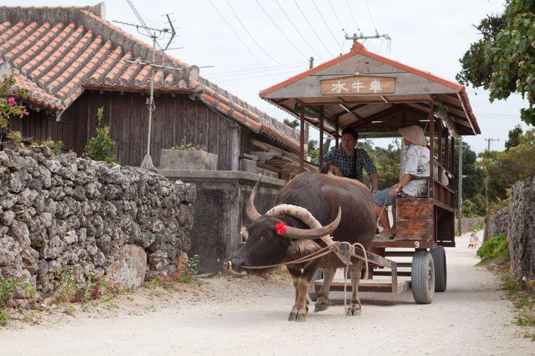 Wasserbüffel ziehen Touristen durch die Gassen der Insel Taketomi.