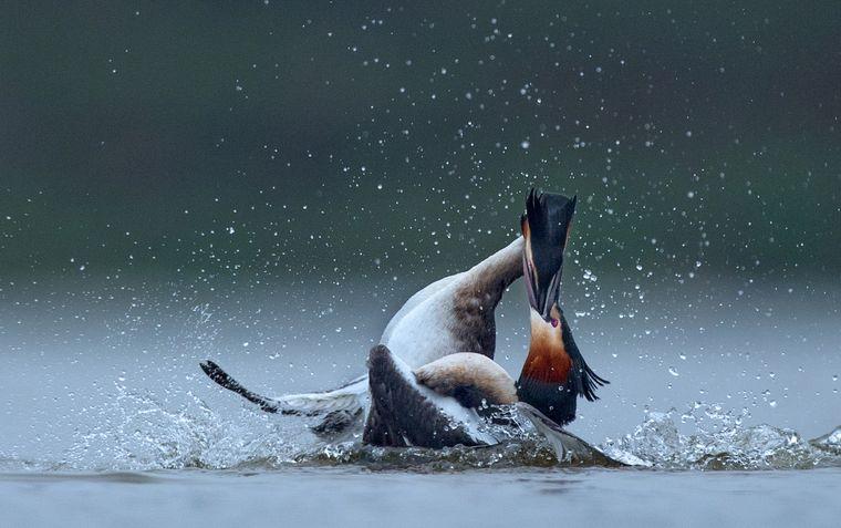 """Platz 2 der Kategorie """"Natur, Meerestiere, Wildtiere"""" belegt Wenming Tang aus China, sie fing mit mehreren Fotos das Leben im Poyang-See in der Jiangxi-Provinz ein. Dort leben 100 Vogelarten, darunter elf gefährdete."""