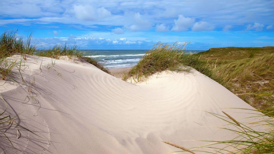 Die dänische Küste mit ihren malerischen Dünen.