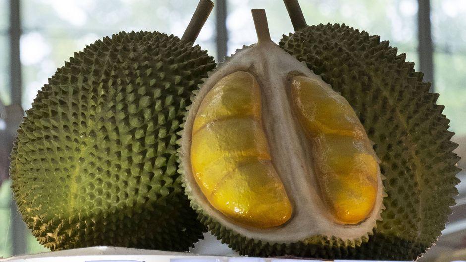Die Durian wird auch Stinkfrucht genannt.