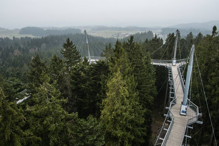 Der Skywalk liegt 25 Meter über der Erde.