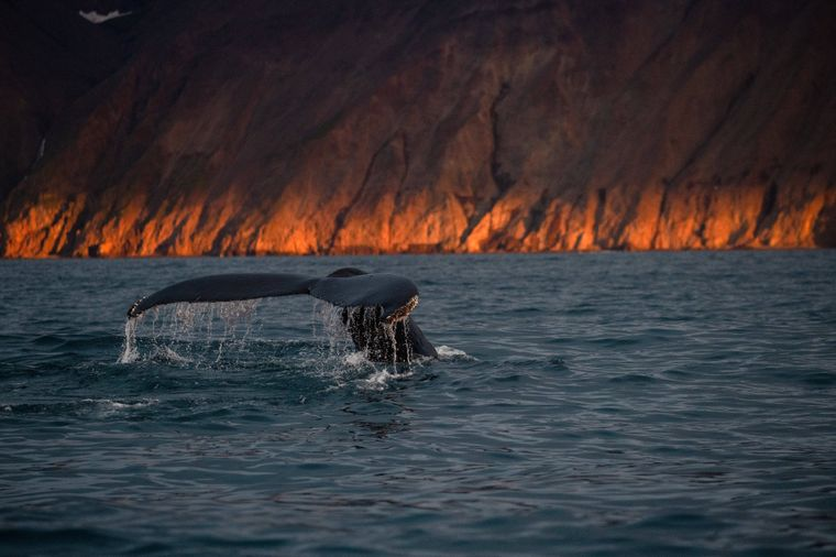 Die Skjalfandi-Bucht in Husavik eignet sich perfekt für eine Whale-Watching-Tour.